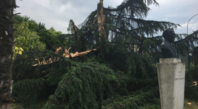 Fulmine cade sulla villetta del ponte e abbatte albero a pochi metri dalla statua di Capograssi